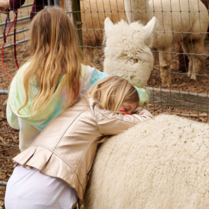 Girl hugging an alpaca